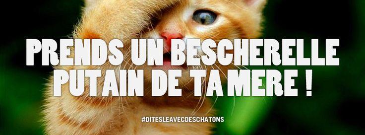 dites le avec des chatons