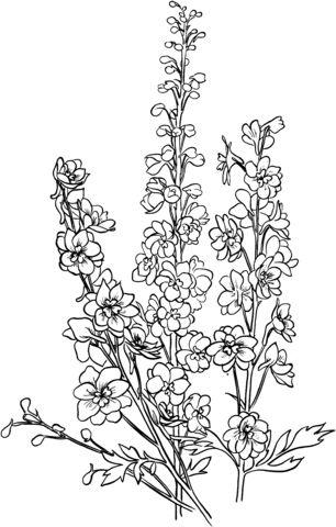 Delphinium Coloring page