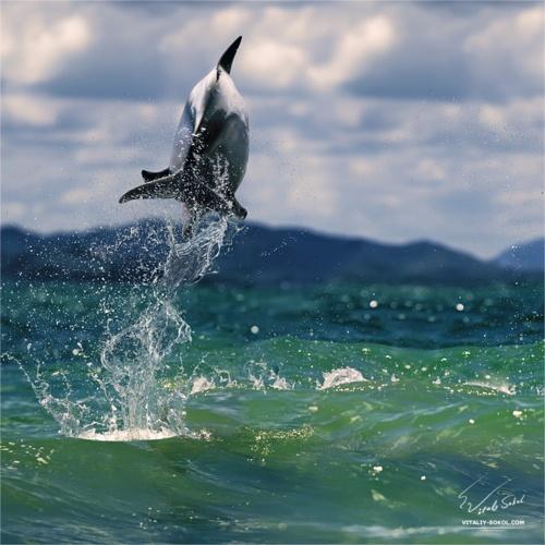 dolphin. love.
