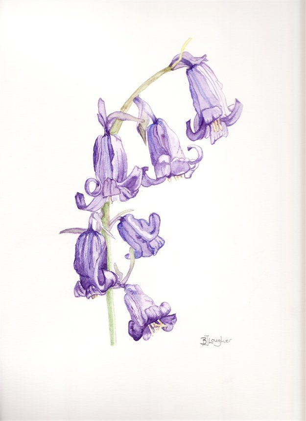 bluebells drawing - Google Search