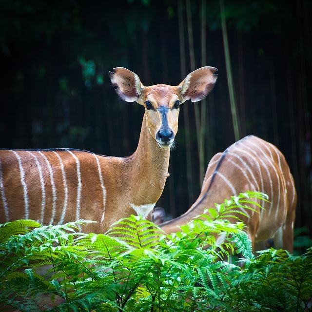 Singapore Zoo 2012 | Flickr - Photo Sharing!