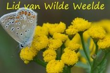 De Nederlandse wilde bijen