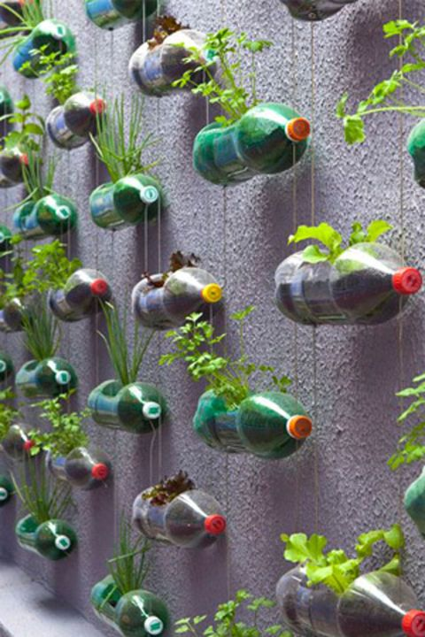 One person's trash is another person's vertical garden—here, empty plastic soda…