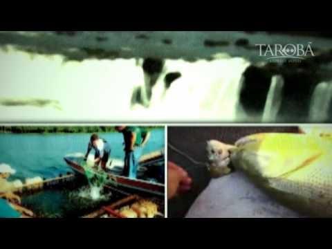 Você que é fã de pescaria, aproveite essa dica. Em Foz do Iguaçu temos uma região privilegiada por rios, e isso facilita a prática da pesca esportiva, utilizando técnicas naturais ou artificiais. Emoção e aventura com os peixes, aproveite, ao longo do rio paraná você irá se divertir de verdade. Pesca de surubins, tucunaré, piapara, pacu e o famoso dourado. Aproveite essa super aventura, venha conhecer!
