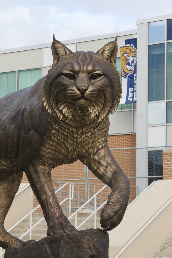 Johnson & Wales University (JWU) commissioned me, Mike Fields, to create Wildcat, a sculpture celebrating their 100th anniversary for 4 campus locations: Providence, Charlotte, Denver & Miami.