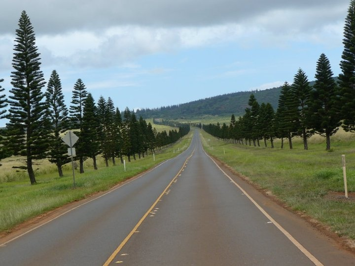 I took this photo while we were riding down the highway in our convertible Jeep! We were amazed at the perfect formation of the Cook Pines and would love to see them again! #iheartlanai #Hawaii