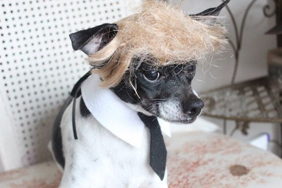 Donald Trump Pet   wig  for dog or cat by lenapavia on Etsy