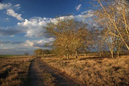 Landscape at Gorongosa National Park, Mozambique. Photo by Jean-Paul Vermeulen.