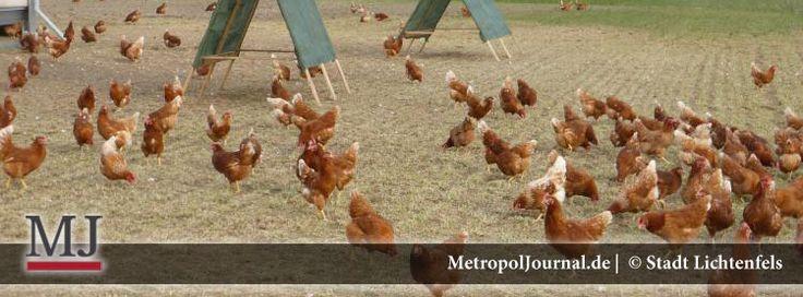 (LIF) Ställe für glückliche Hühner gesucht – Erfolgreich mit Legehennen in die Zukunft - http://metropoljournal.de/?p=9129