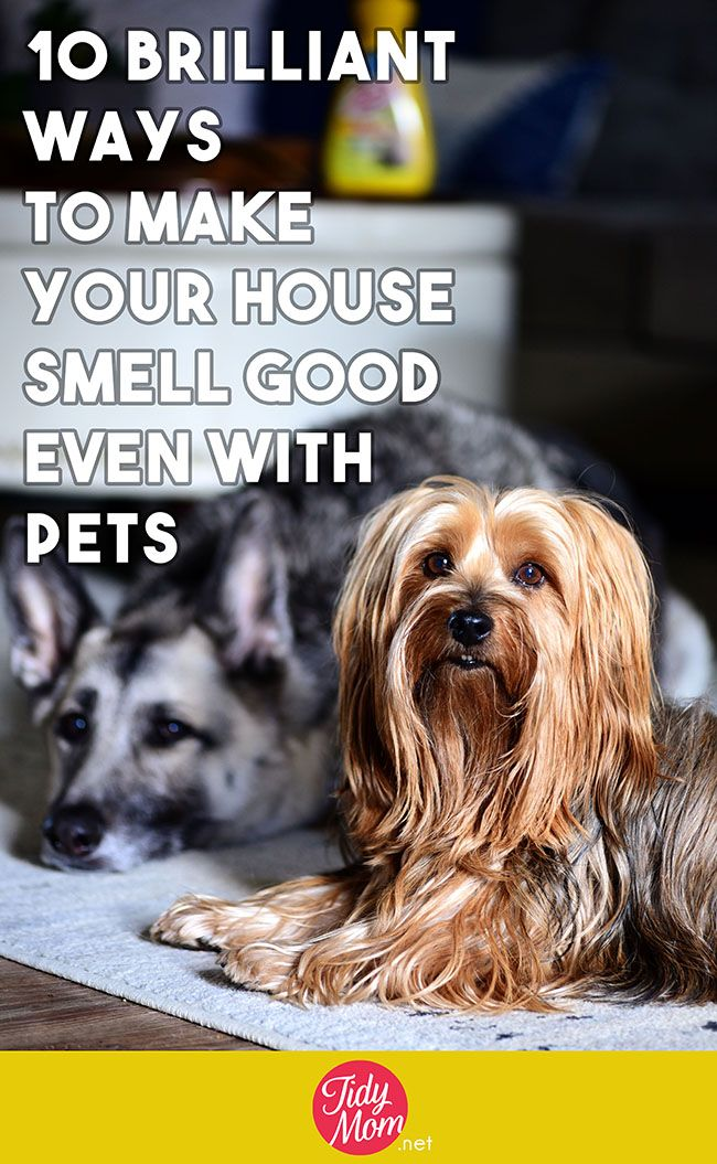 10 Brilliant Tips To Make Your House Smell Good House Smell Good