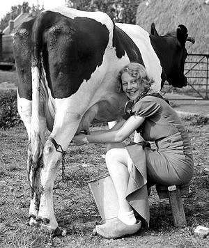 Cows are our basic source of milk, milk is great source for protein!