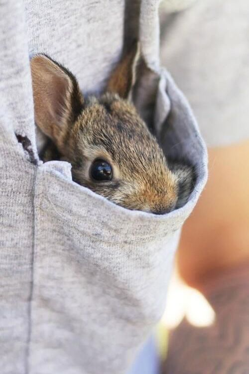 Is that a bunny in your pocket...?