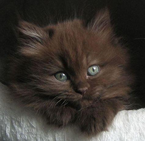 brooklyn cat sitting
