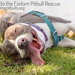 Pictures of Hailey a Pit Bull Terrier for adoption in Dallas, GA who needs a loving home. #pitbull
