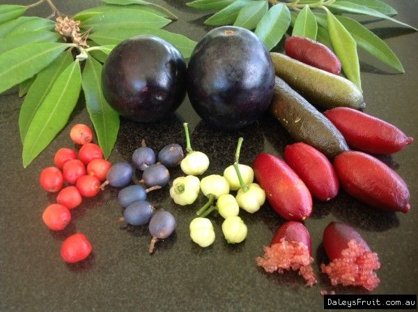 Australian Native Bushfood Gardens Give Big Rewards For Little Work. Often The  Food Produced Is Called Bush Tucker.