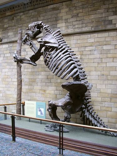 Giant Ground Sloth fossil skeleton (Megatherium we think).