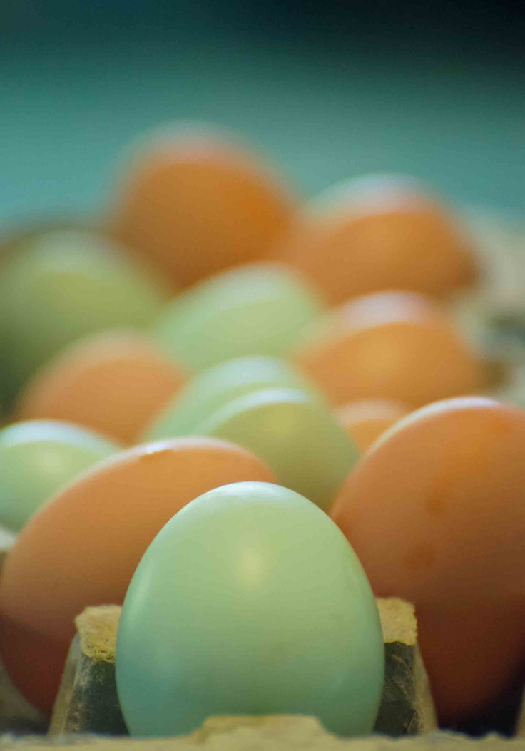 Organic Eggs-but don't eat the yolks very often (that is where the fat & cholesterol is...The whites are pure protein). <3