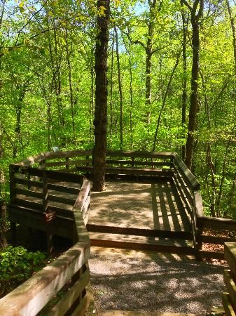 Hemlock Bluffs Nature Preserve, Cary NC