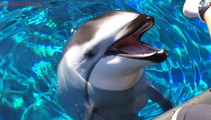 Vancouver Aquarium will no longer house whales and dolphins