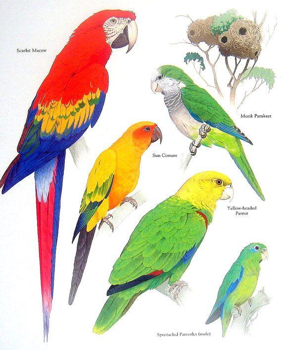 Best 25+ Monk Parakeet Ideas On Pinterest