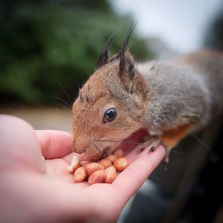 Observer des petits animaux manger peut être un spectacle très attendrissant. C'est pourquoi ce photographe a eu l'idée de les nourrir et de les immortaliser dans les forêts de son pays natal : la Finlande. DGS vous fait découvrir ces mignonnes créatures da...