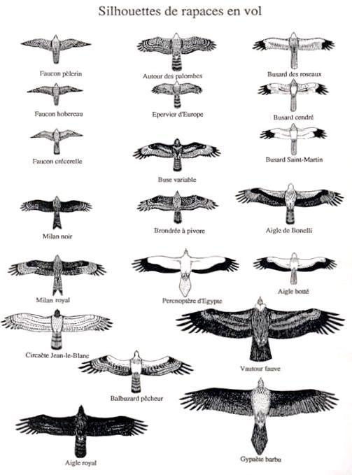 Votre premier stage de fauconnerie