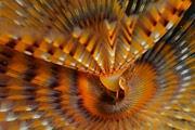 Fotografia subacquea: creature Flash dal profondo