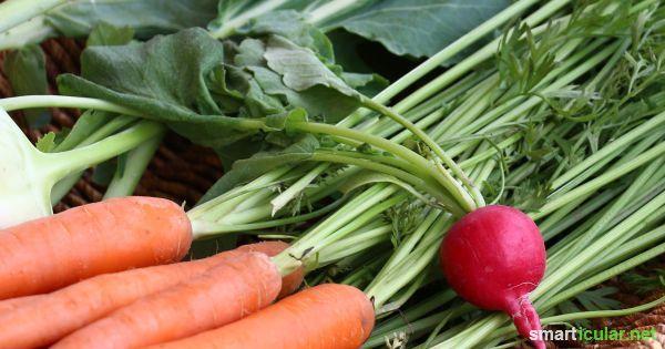 Schmackhaft und gesund: Gemüseblätter essen statt wegwerfen