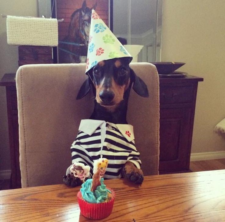 455 Best Images About Dachshund Birthdays Amp Cakes On