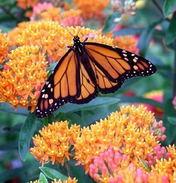 beat the heat plants - they can withstand hot, dry summers better than most other plants | drought & heat tolerant perennials, trees and shrubs