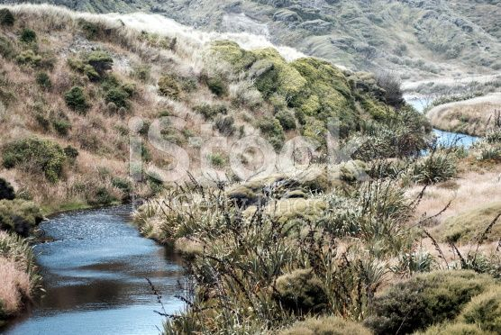 New Zealand Landscape with Tussock and Harakeke royalty-free stock photo