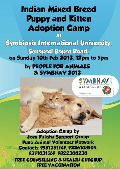Puppy & Kitten Adoption Camp at Symbiosis International University, Senapati Bapat Road, #Pune | 12 pm - 5 pm
