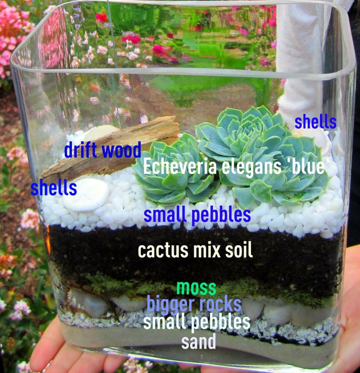 Anythingology: planting succulents