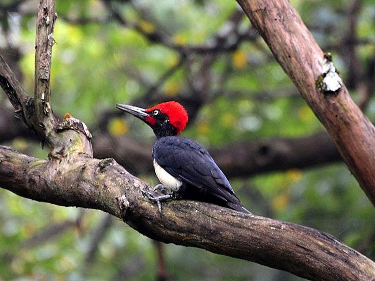 Cotigao Wildlife Sanctuary - in Goa, India