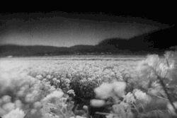 "disorienteddreams:  "" Maria No Oyuki / Oyuki the Virgin (Kenji Mizoguchi, 1935)  """