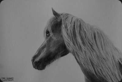 horse by miss talseth illustration