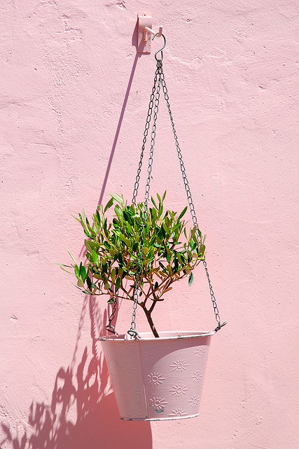 grow your own olive tree