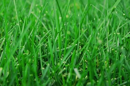 How to Take Care of St. Augustine Grass in Texas
