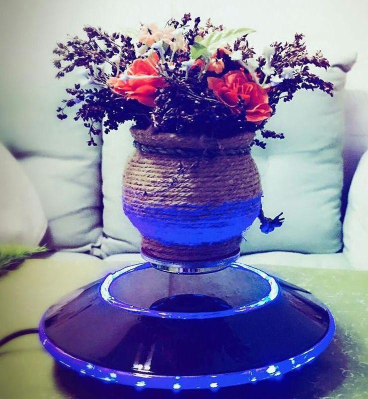 Ornamental air bonsai.