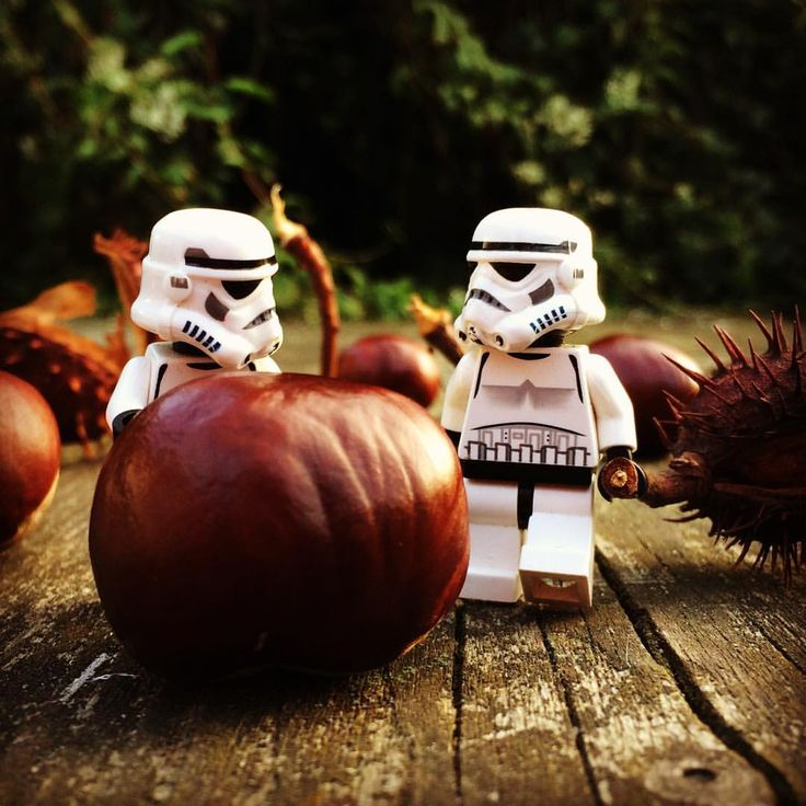 Gathering chestnuts #chestnut #chestnuts #fall #gathering #starwars #starwarslegos #starwarslego #lego #legostarwars #minifigures #minifigure #stormtrooperlife #stormtrooper #iphonography #bob #365project #day280