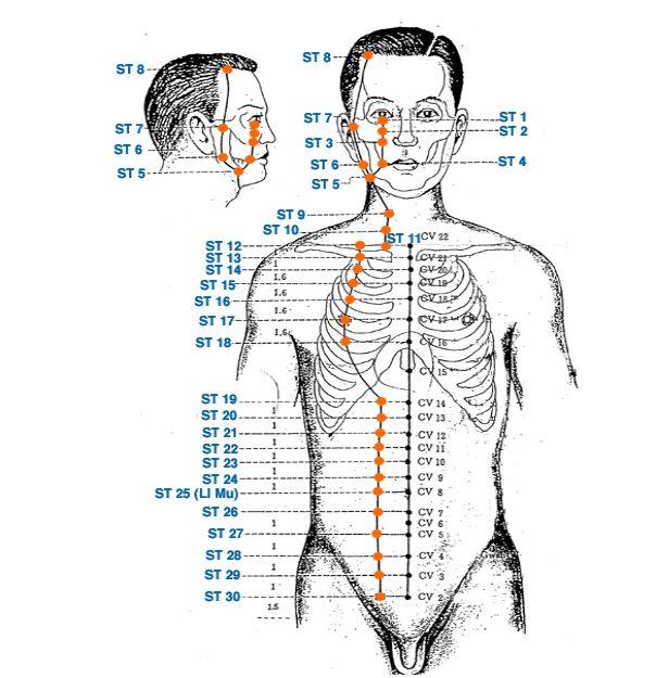 Меридиан желудка - Triquetra Технологии Здоровья Традиционная китайская медицина и цигун
