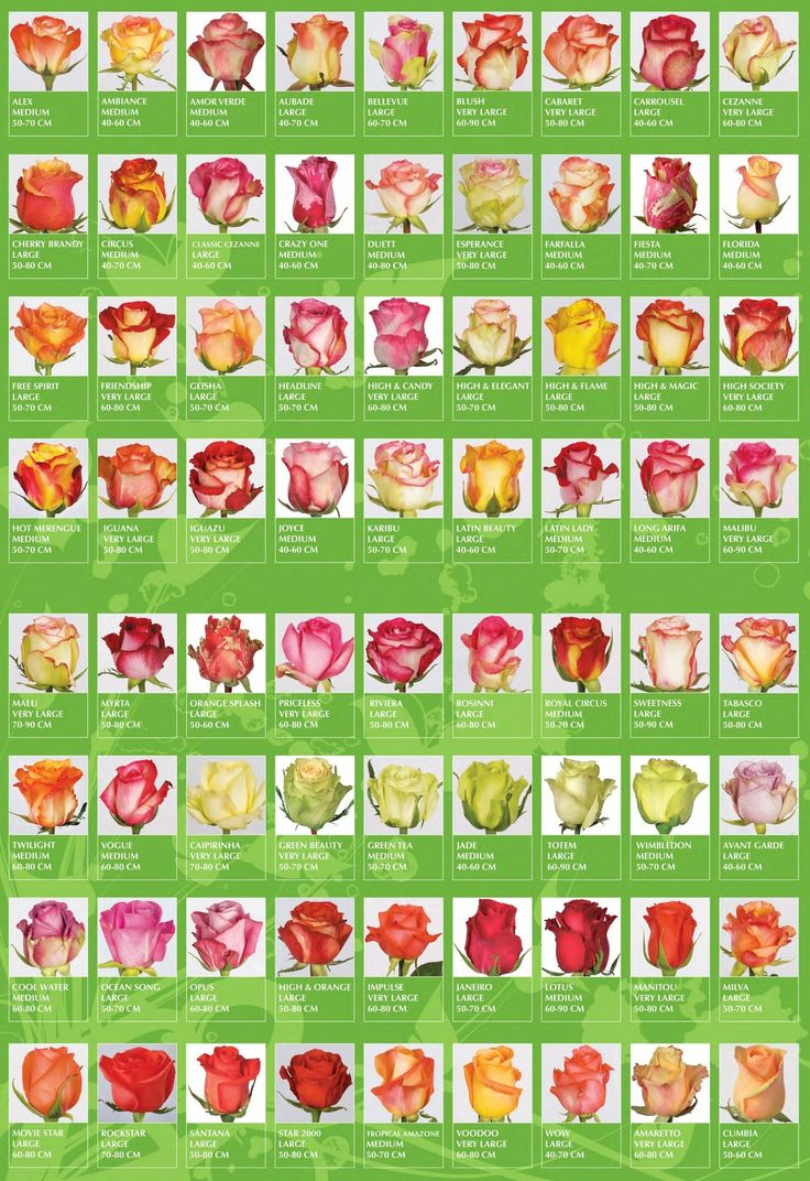 Garden flowers names - Pretty Flowers