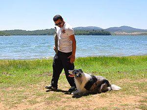köpek eğitimi - ileri taat eğitimi