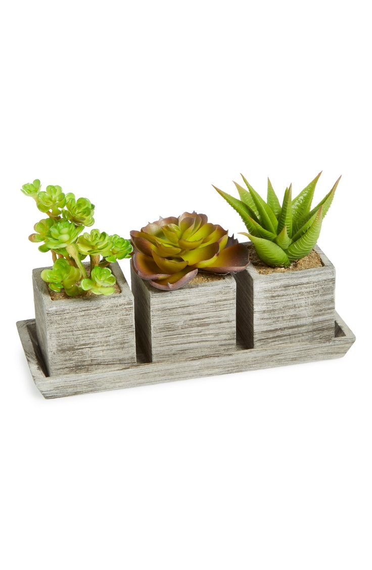 Adoring this trio of charming artificial succulents!