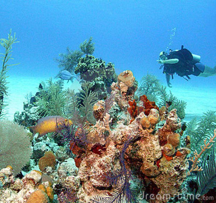 san salvador in the bahamas | ... honeycomb cowfish, off the island of san salvador, bahamas