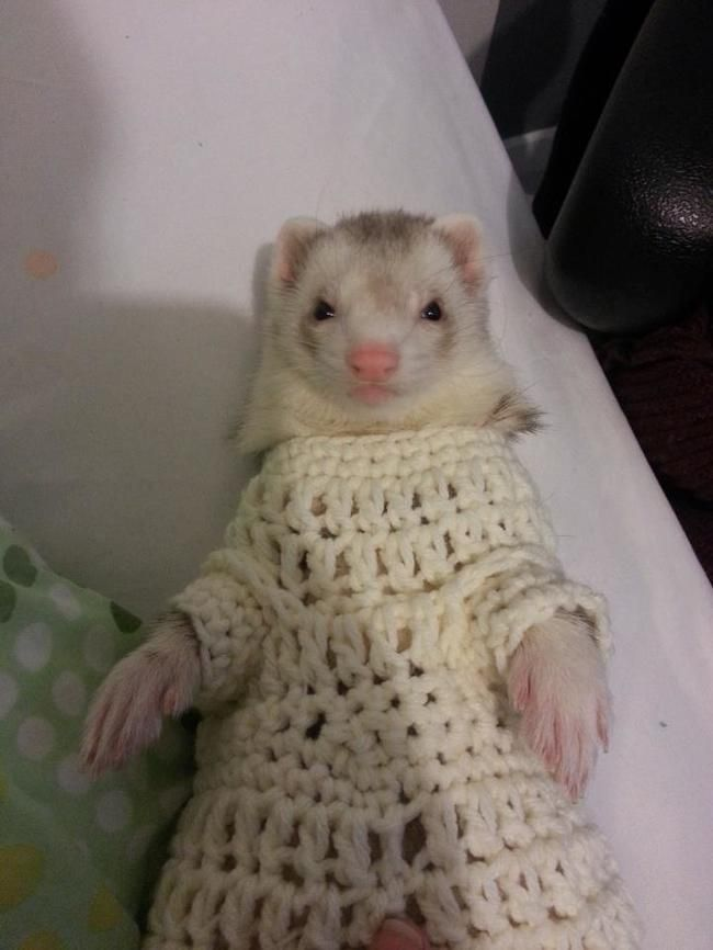 Best Critters In Sweaters Images On Pinterest Adorable - 22 adorable animals wearing miniature sweaters