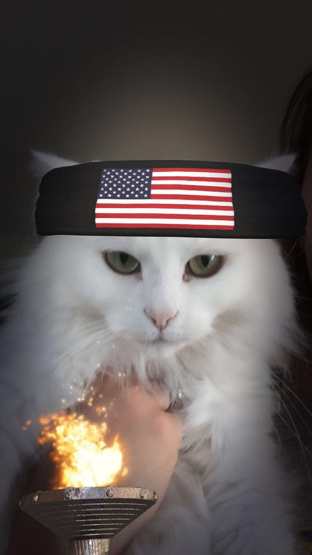 follow me on IG missbettywhite2009 #cat #lol #whitecat #betch #bitch #longhairdontcare #funny #humor #animals #pets #rescue #bettywhite #snapchat #USA #unitedstates #america #headband #torch #olympics