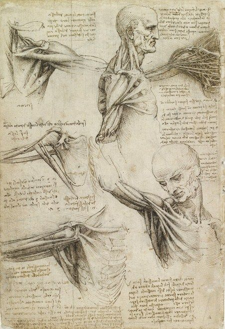 The muscles of the shoulder, RCIN 919003