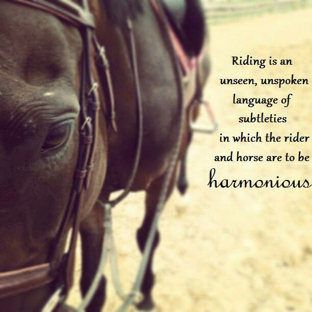 gallery for equestrian quotes