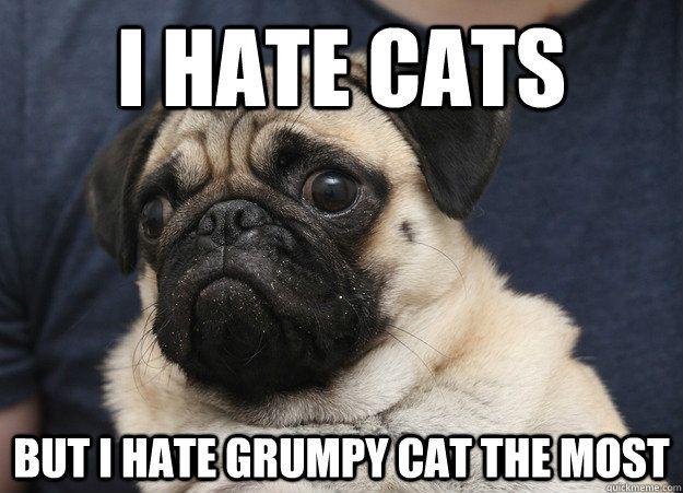 i hate cats but i hate grumpy cat the most - Grumpy Pug ... Loathe Cat